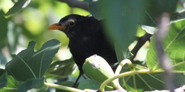 DETERING BIRDS (5)