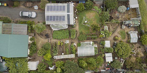 Urban Food Gard FEATURE IMAGE