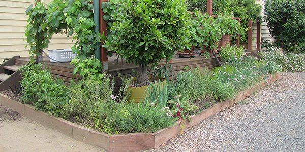 Urban Food Garden Walk Through - FEATURE IMAGE